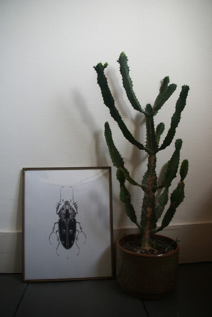 Insect Studio Maritte